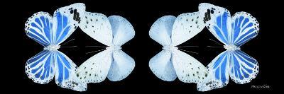 Miss Butterfly Duo Salateuploea Pan - X-Ray Black Edition II-Philippe Hugonnard-Photographic Print