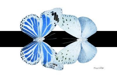 Miss Butterfly Duo Salateuploea - X-Ray B&W Edition-Philippe Hugonnard-Photographic Print