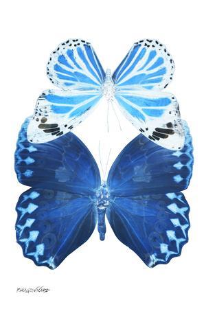 https://imgc.artprintimages.com/img/print/miss-butterfly-duo-stichatura-ii-x-ray-white-edition_u-l-q19nauv0.jpg?p=0