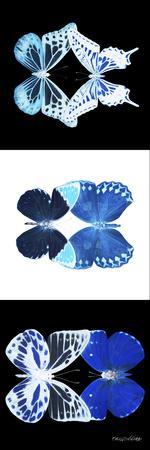 https://imgc.artprintimages.com/img/print/miss-butterfly-duo-x-ray-pano_u-l-q19nbvz0.jpg?p=0