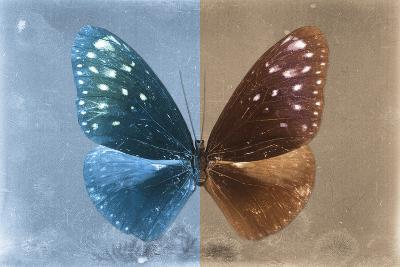 Miss Butterfly Euploea - Blue & Caramel-Philippe Hugonnard-Photographic Print