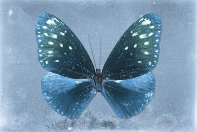 Miss Butterfly Euploea - Blue-Philippe Hugonnard-Photographic Print