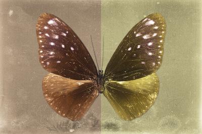 Miss Butterfly Euploea - Caramel & Gold-Philippe Hugonnard-Photographic Print