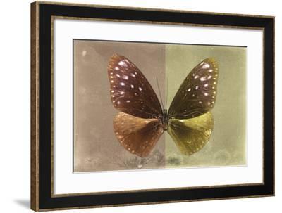 Miss Butterfly Euploea - Caramel & Gold-Philippe Hugonnard-Framed Photographic Print