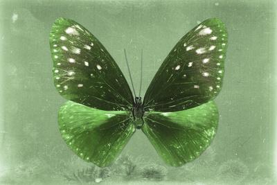 Miss Butterfly Euploea - Green-Philippe Hugonnard-Photographic Print