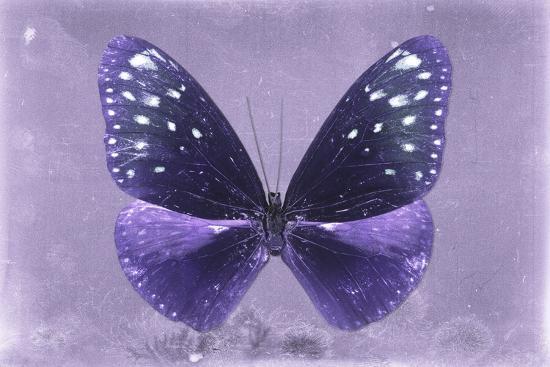 Miss Butterfly Euploea - Purple-Philippe Hugonnard-Photographic Print