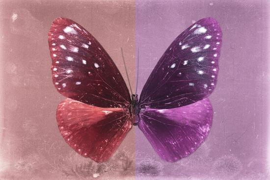 Miss Butterfly Euploea - Red & Hot Pink-Philippe Hugonnard-Photographic Print