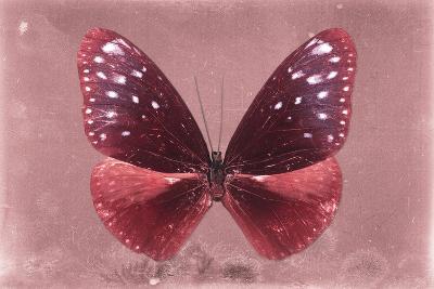Miss Butterfly Euploea - Red-Philippe Hugonnard-Photographic Print