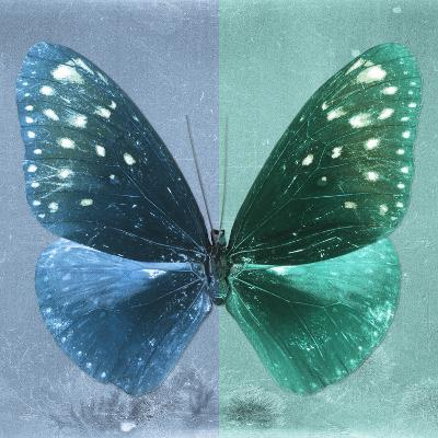 Miss Butterfly Euploea Sq - Blue & Coral Green-Philippe Hugonnard-Photographic Print
