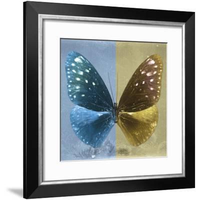 Miss Butterfly Euploea Sq - Blue & Gold-Philippe Hugonnard-Framed Photographic Print