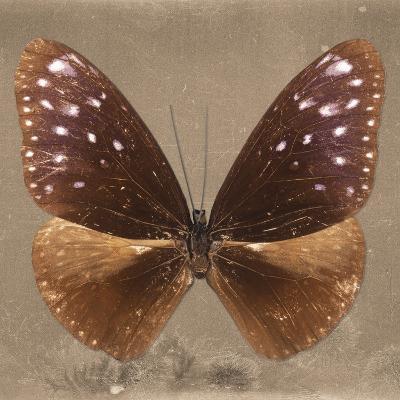 Miss Butterfly Euploea Sq - Caramel-Philippe Hugonnard-Photographic Print