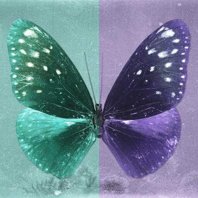 Miss Butterfly Euploea Sq - Coral Green & Purple-Philippe Hugonnard-Photographic Print