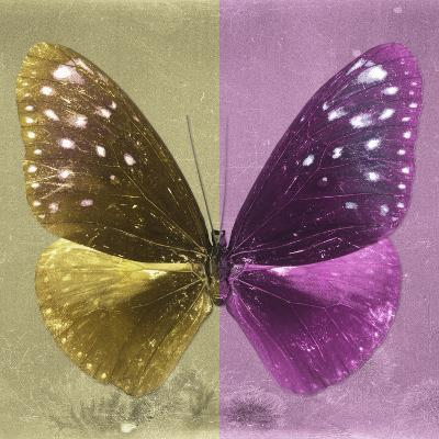 Miss Butterfly Euploea Sq - Gold & Hot Pink-Philippe Hugonnard-Photographic Print