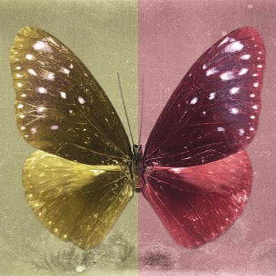 Miss Butterfly Euploea Sq - Gold & Red-Philippe Hugonnard-Photographic Print