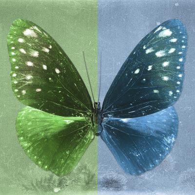 Miss Butterfly Euploea Sq - Green & Blue-Philippe Hugonnard-Photographic Print