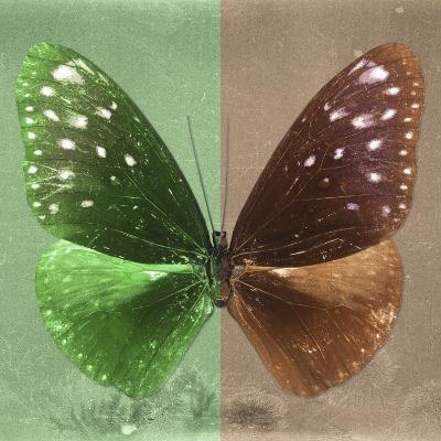 Miss Butterfly Euploea Sq - Green & Caramel-Philippe Hugonnard-Photographic Print