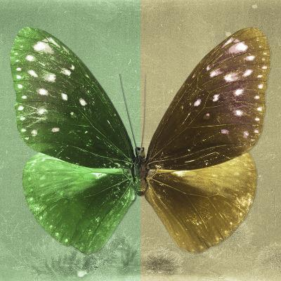 Miss Butterfly Euploea Sq - Green & Gold-Philippe Hugonnard-Photographic Print