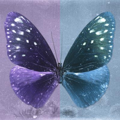 Miss Butterfly Euploea Sq - Purple & Blue-Philippe Hugonnard-Photographic Print