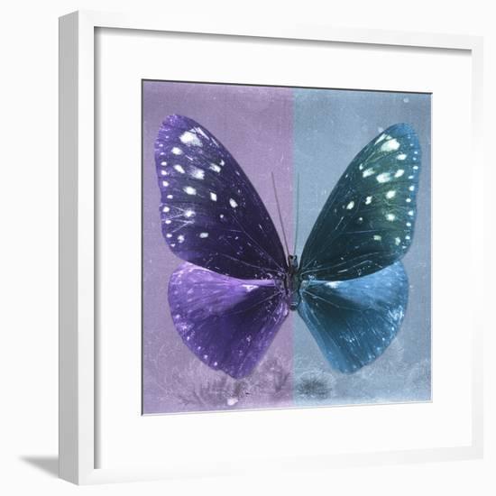 Miss Butterfly Euploea Sq - Purple & Blue-Philippe Hugonnard-Framed Photographic Print