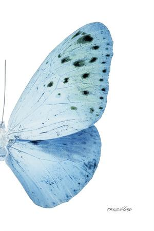 https://imgc.artprintimages.com/img/print/miss-butterfly-euploea-x-ray-right-white-edition_u-l-q19nbpw0.jpg?p=0