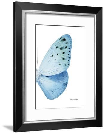Miss Butterfly Euploea - X-Ray Right White Edition-Philippe Hugonnard-Framed Photographic Print