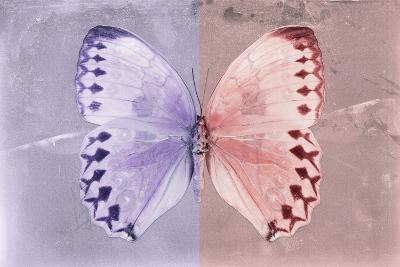 Miss Butterfly Formosana - Mauve & Red-Philippe Hugonnard-Photographic Print