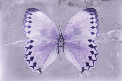 Miss Butterfly Formosana - Mauve-Philippe Hugonnard-Photographic Print