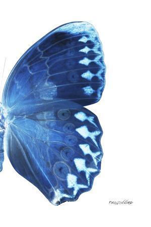 https://imgc.artprintimages.com/img/print/miss-butterfly-formosana-x-ray-right-white-edition_u-l-q19ncmo0.jpg?p=0
