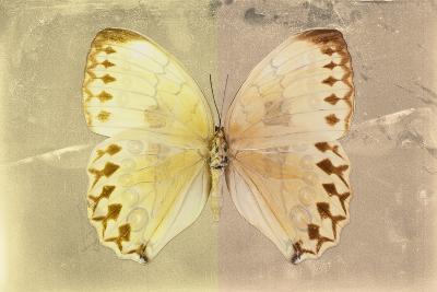 Miss Butterfly Formosana - Yellow & Dark Beige-Philippe Hugonnard-Photographic Print