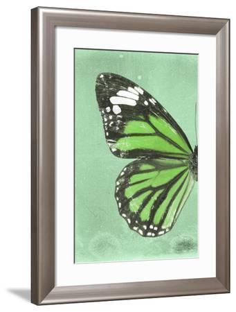 Miss Butterfly Genutia Profil - Green-Philippe Hugonnard-Framed Photographic Print