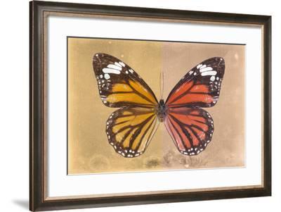 Miss Butterfly Genutia Profil - Honey & Orange-Philippe Hugonnard-Framed Photographic Print