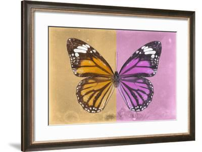 Miss Butterfly Genutia Profil - Honey & Pink-Philippe Hugonnard-Framed Photographic Print