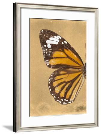 Miss Butterfly Genutia Profil - Honey-Philippe Hugonnard-Framed Photographic Print