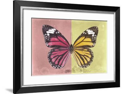 Miss Butterfly Genutia Profil - Hot Pink & Yellow-Philippe Hugonnard-Framed Photographic Print
