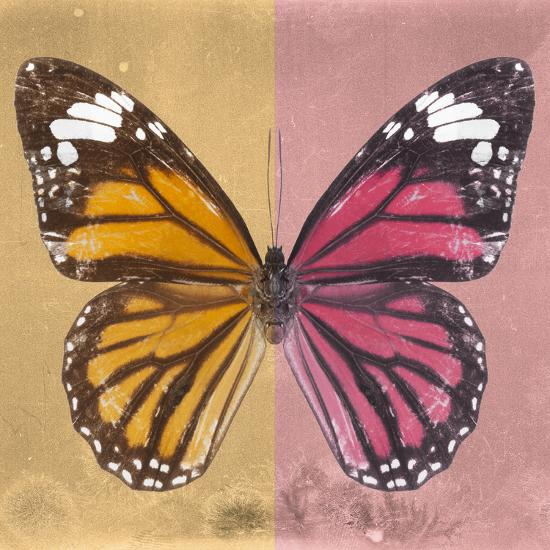 Miss Butterfly Genutia Sq - Honey & Hot Pink-Philippe Hugonnard-Photographic Print