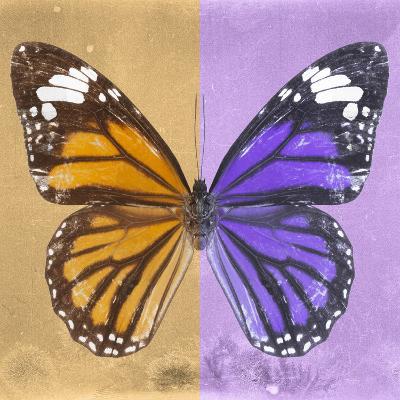 Miss Butterfly Genutia Sq - Honey & Purple-Philippe Hugonnard-Photographic Print