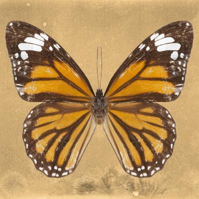 Miss Butterfly Genutia Sq - Honey-Philippe Hugonnard-Photographic Print