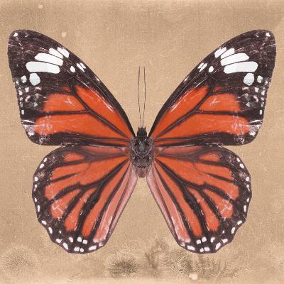 Miss Butterfly Genutia Sq - Orange-Philippe Hugonnard-Photographic Print