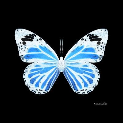 Miss Butterfly Genutia Sq - X-Ray Black Edition-Philippe Hugonnard-Photographic Print