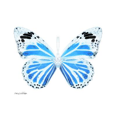 Miss Butterfly Genutia Sq - X-Ray White Edition-Philippe Hugonnard-Photographic Print