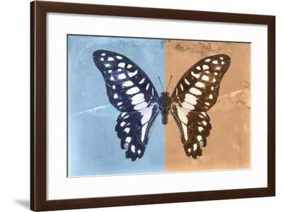 Miss Butterfly Graphium Profil - Blue & Orange-Philippe Hugonnard-Framed Photographic Print
