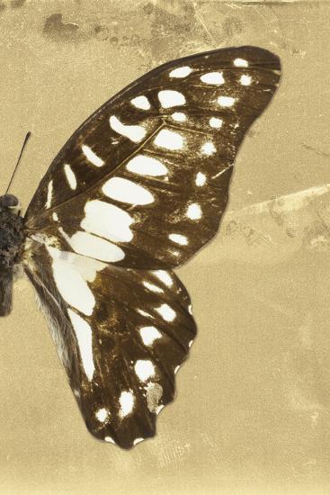 Miss Butterfly Graphium Profil - Honey-Philippe Hugonnard-Photographic Print