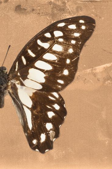Miss Butterfly Graphium Profil - Orange-Philippe Hugonnard-Photographic Print