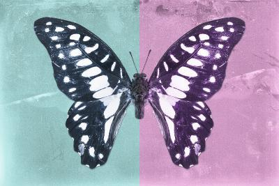 Miss Butterfly Graphium Profil - Turquoise & Pink-Philippe Hugonnard-Photographic Print
