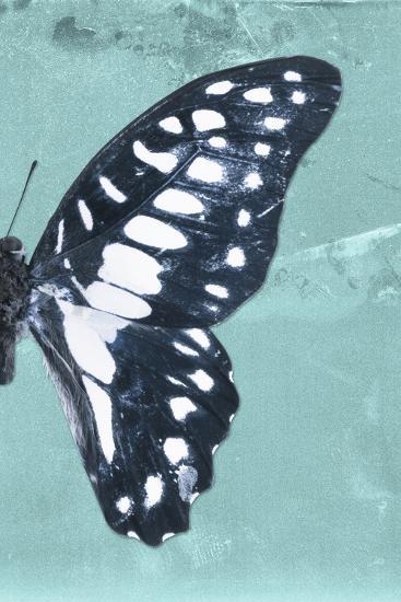 Miss Butterfly Graphium Profil - Turquoise-Philippe Hugonnard-Photographic Print