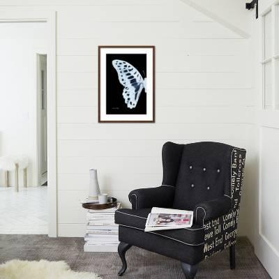 butterfly wall decor a lively addition to your life.htm miss butterfly graphium x ray left black edition  photographic  miss butterfly graphium x ray left