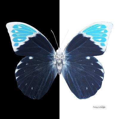 Miss Butterfly Hebomoia Sq - X-Ray B&W Edition-Philippe Hugonnard-Photographic Print