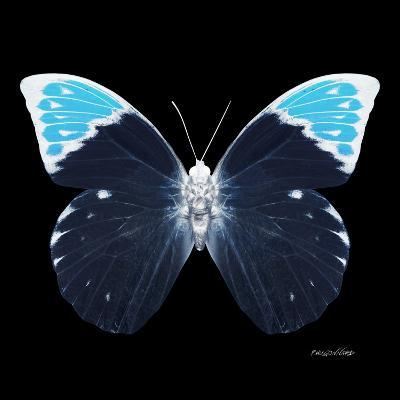 Miss Butterfly Hebomoia Sq - X-Ray Black Edition-Philippe Hugonnard-Photographic Print