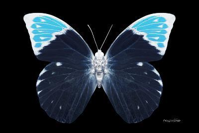 Miss Butterfly Hebomoia - X-Ray Black Edition-Philippe Hugonnard-Photographic Print