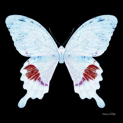 Miss Butterfly Hermosanus Sq - X-Ray Black Edition-Philippe Hugonnard-Photographic Print